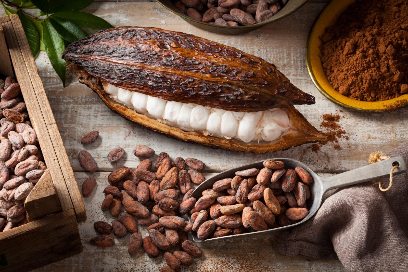 Le cacaoyer à l'origine de nos plaisirs gustatifs