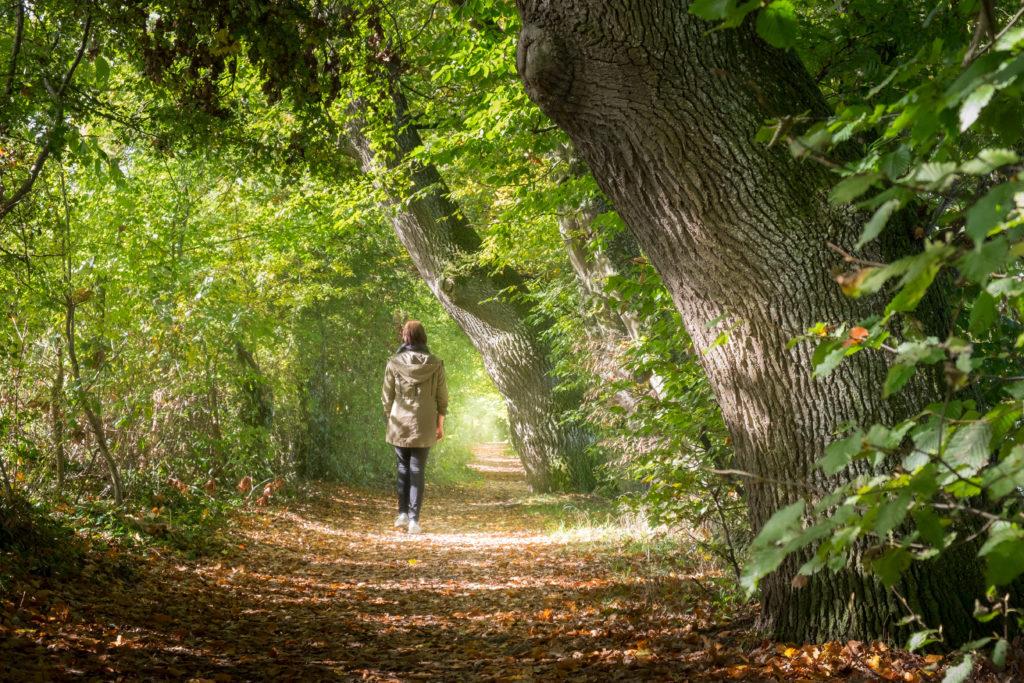 Une promenade en forêt pour découvrir les bienfaits du shinrin-yoku