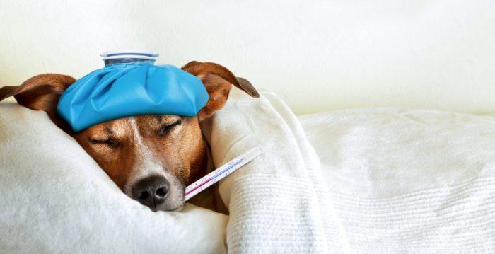 Pourquoi a-t-on de la fièvre ?