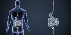 De l'estomac au rectum