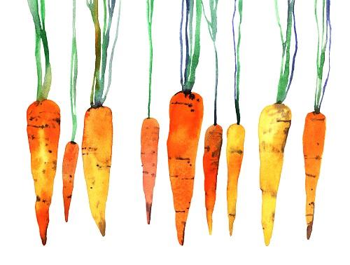 Bienfaits et valeurs nutritionnelles de la carotte