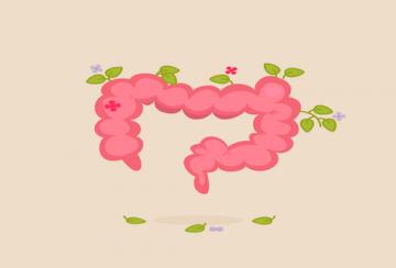 tout savoir sur le microbiote intestinal