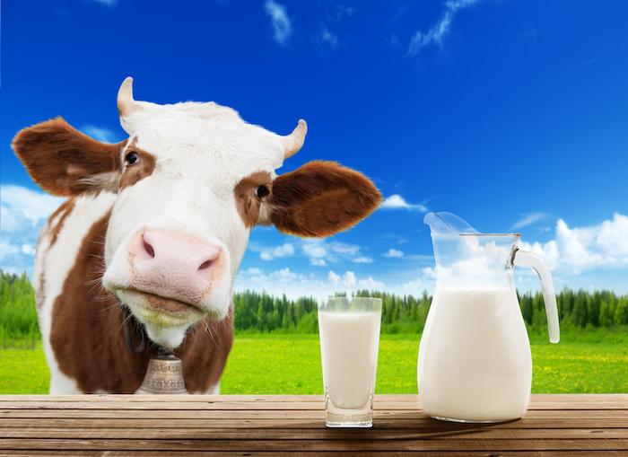 Le lait de vache mérite-t-il qu'on en fasse tout un fromage ?