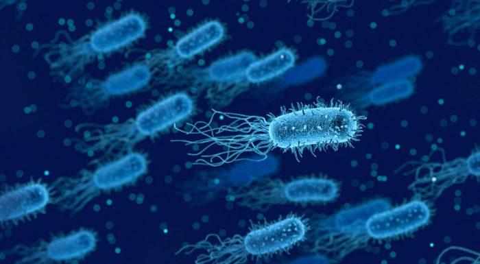 Les infections à clostridium difficile, la bête noire des hôpitaux