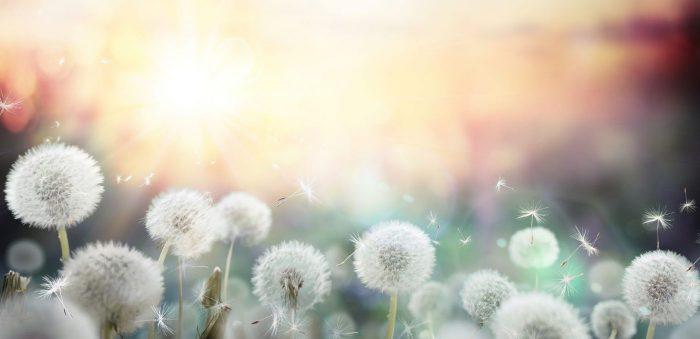 Allergies respiratoires : le type de pollen à vraiment prendre en compte