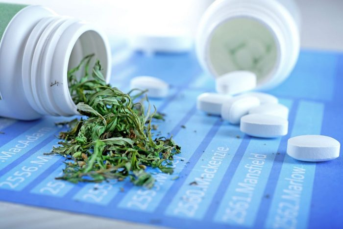 Cannabis et antibiorésistance