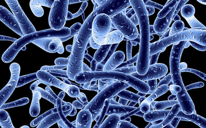 insuffisance renale chronique et microbiote intestinal